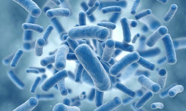 batterio della listeria