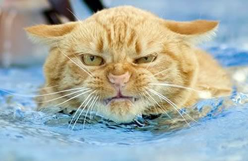 Istruzioni per lavare un gatto