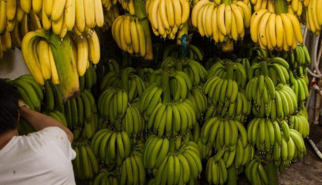 produzione banane