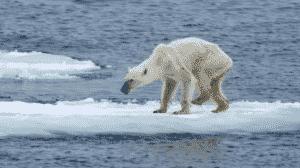 scioglimento dei ghiacci, img. dal web