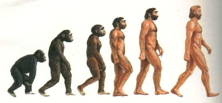 evoluzione scimmia-uomo