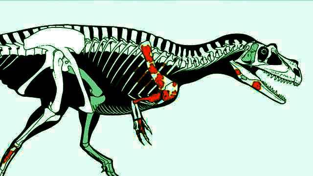 Rappresentazione del Ceratosauro