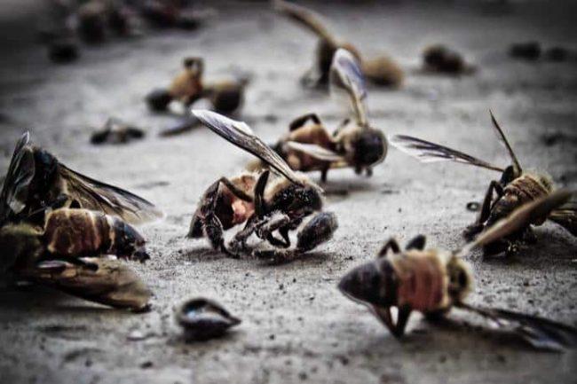 Gli insetti stanno morendo,  estinzione entro un secolo