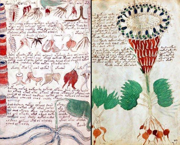 Voynich, il manoscritto misterioso è stato decifrato