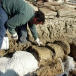 A Matera la più grande balena fossile mai scoperta