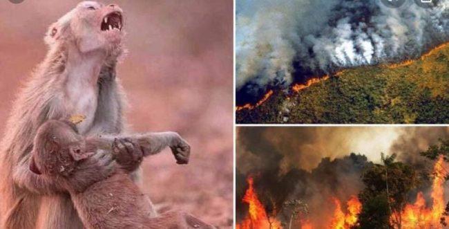 L'Amazzonia in fiamme, ma Bolsonaro dice: «Non ho risorse per spegnerla»