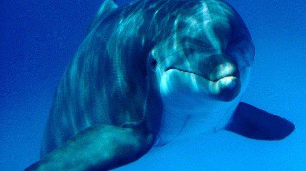 Ritrovata una creatura marina sconosciuta, molto simile ad un delfino