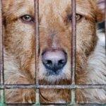 Cina, la carne di cane e di gatto non potrà più essere mangiata