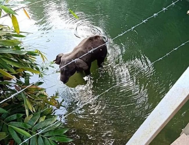 elefantessa uccisa
